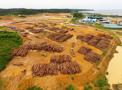 Operation in our timber park of 70 000-M² at kribi Port
